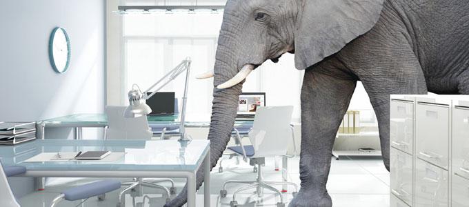 Tiere im Büro