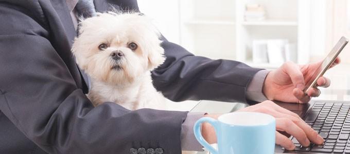 Hund Im Buro Warum Tiere Das Arbeitsklima Verbessern